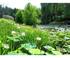 Wunderbare Stelle mit Teich mit Wald Ungarn Somogy County